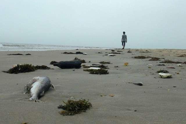Cá chết ven biển